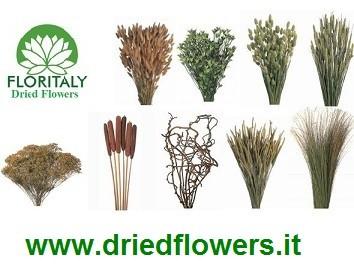 DriedFlowers
